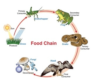 A Food Diagram Wiring Diagram Detailed